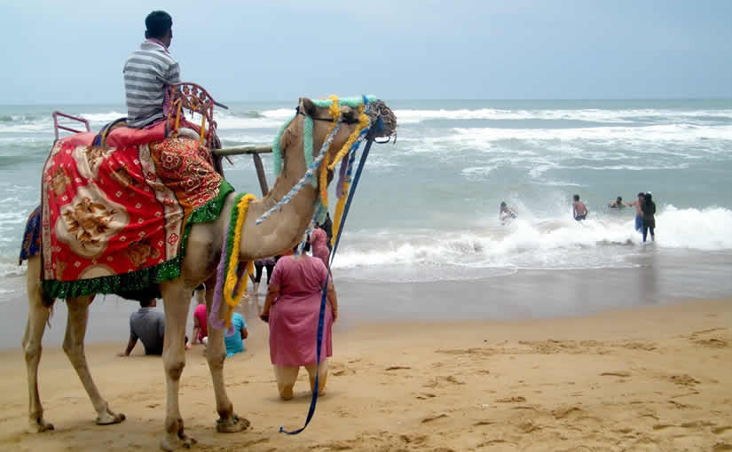 108-CAMEL RIDE AT PURI BEACH