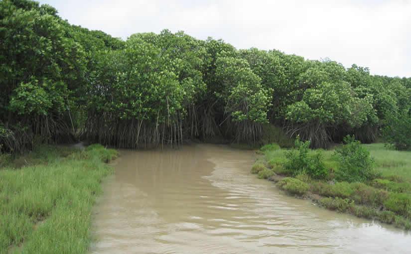 DISCOVER THE MINI-AMAZON